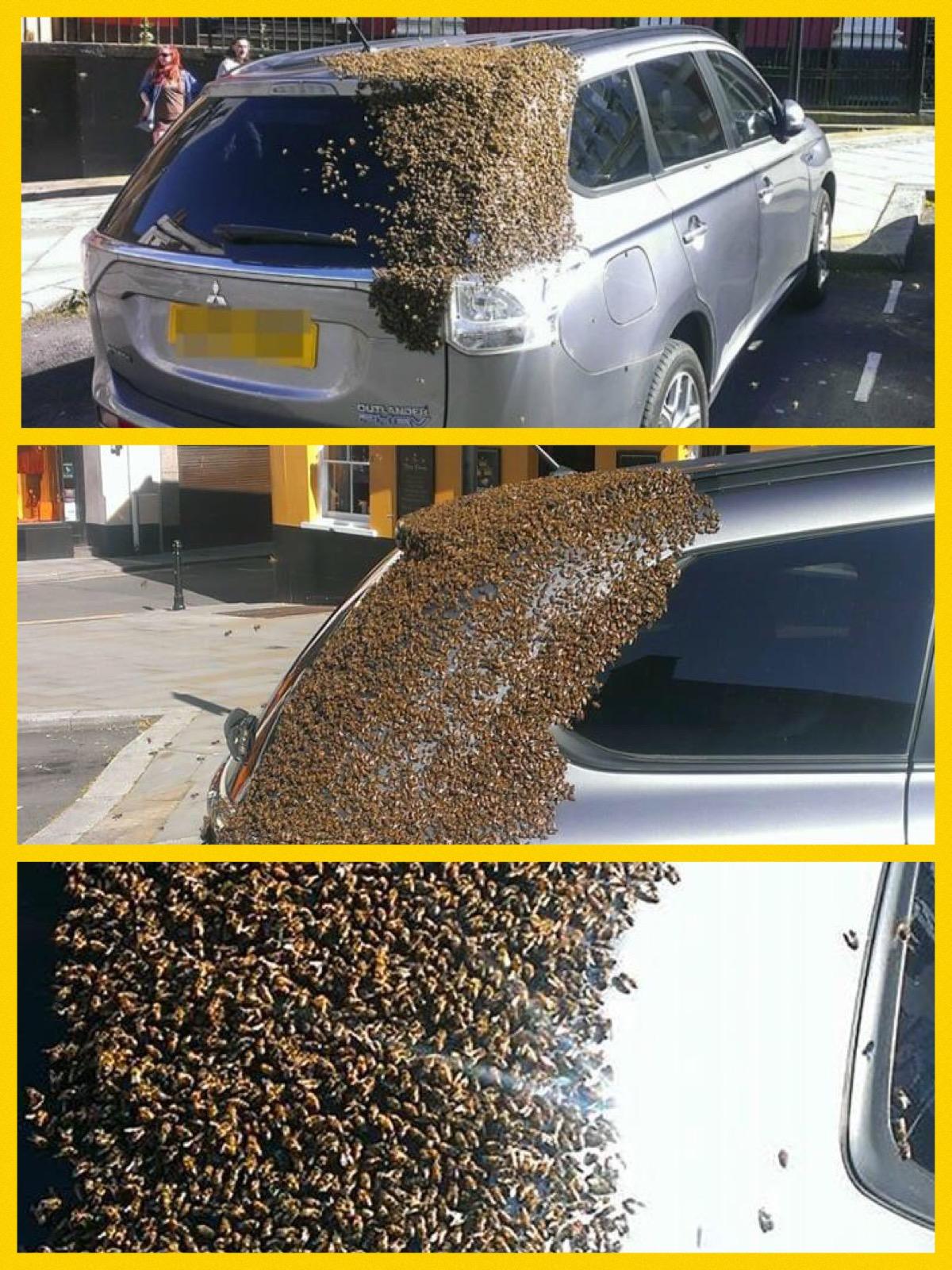 2万匹の蜂に覆われたアウトランダーPHEV ウエールズ