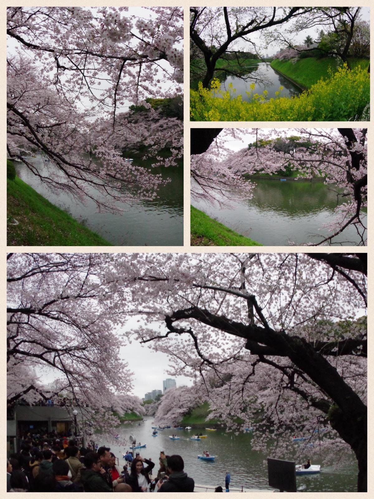 皇居 千鳥ヶ淵 桜 2016