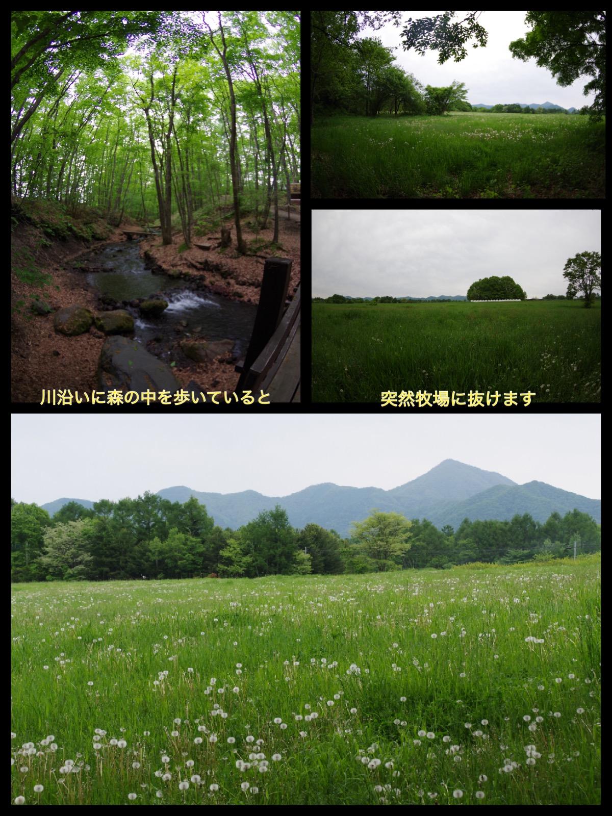 北軽井沢スウィートグラス 施設 散歩