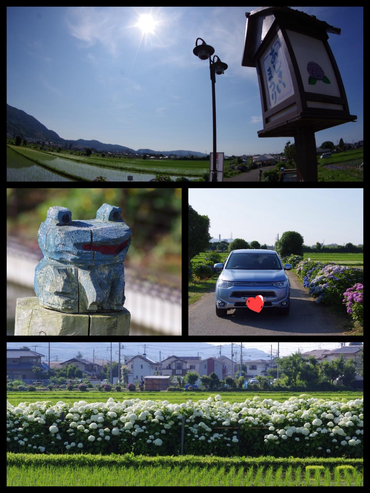 開成町 あじさい祭り 2016