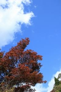 紅葉は始まったばかり