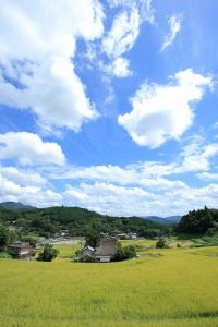 日本の棚田百選「長谷の棚田」(1)