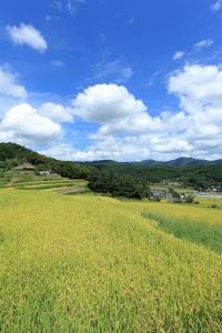 日本の棚田百選「長谷の棚田」(2)