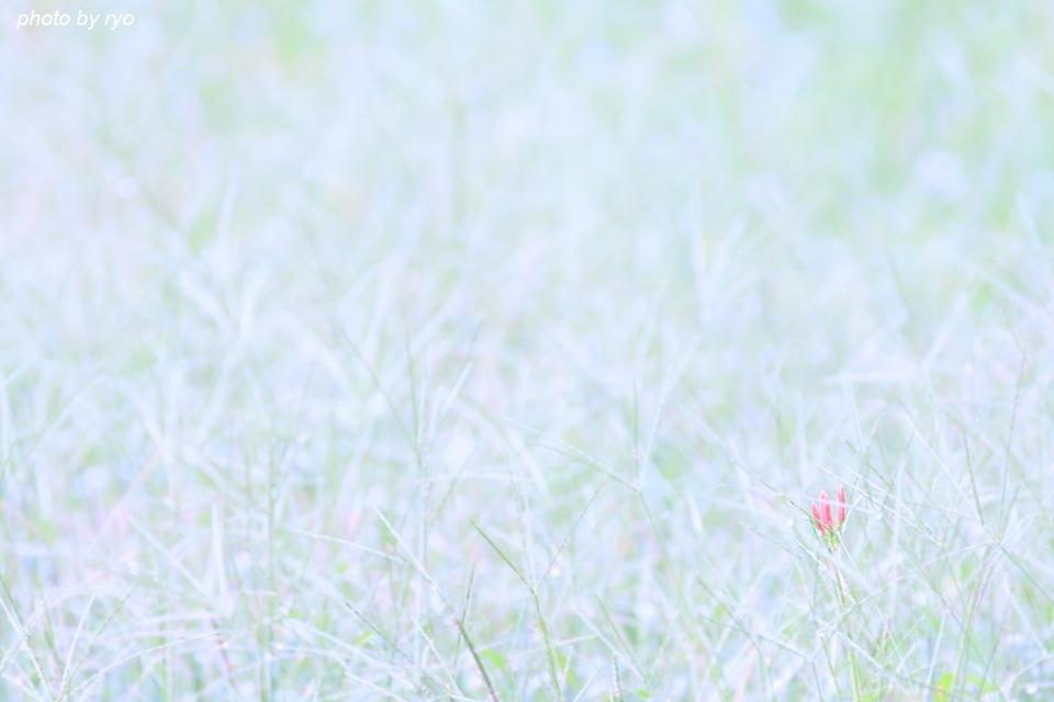 辻の彼岸花_2-6