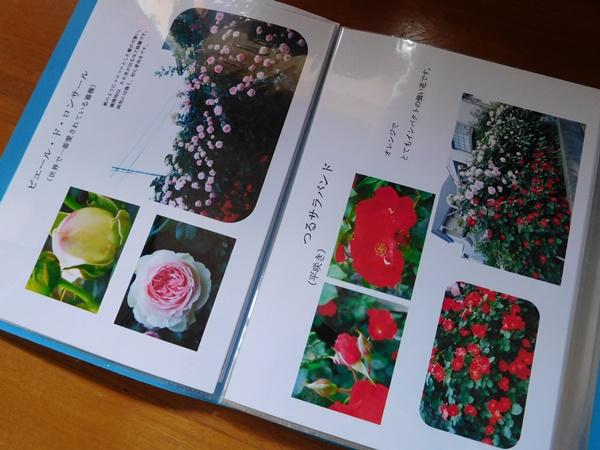 DSCN0773.jpg