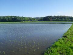 【写真】田植え作業が終わった農園前の田んぼの様子