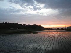 【写真】強風が収まり夕焼け空となった農園周辺の様子