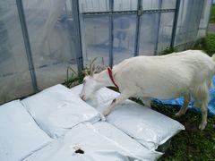 【写真】アランが育苗用ポットの土の袋をあけようとしているところ