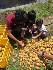 【写真】収穫したジャガイモを洗っている子供たちの様子