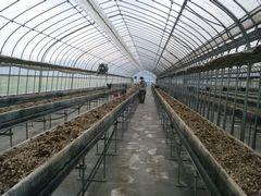"""【写真】農園主が、高設ベッドの培土を""""みのる君""""で耕耘しているところ"""