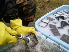 【写真】ジェットノズルから出す水で育苗ポットを洗っている様子(右側は白い消毒液で育苗ポットを浸しているところ)