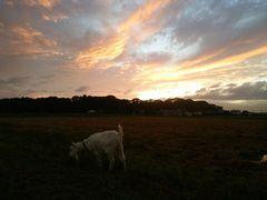 【写真】日暮れ寸前の夕焼け空の下で草を食べているアラン