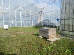 【写真】養蜂屋さんに届けてもらったミツバチの巣箱