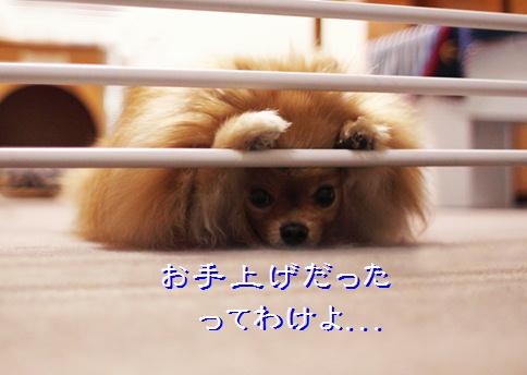 blog20160413-7.jpg
