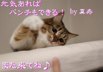 blog20160413-8.jpg