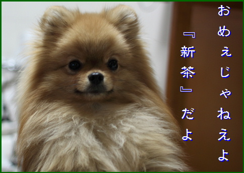 blog20160509-3.jpg