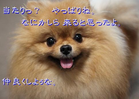 blog20160515-8.jpg