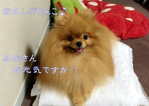 blog20160912_02.jpg