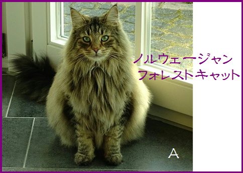 blog20161009-1.jpg