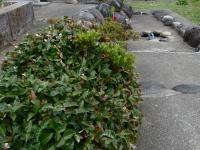 若宮親水公園