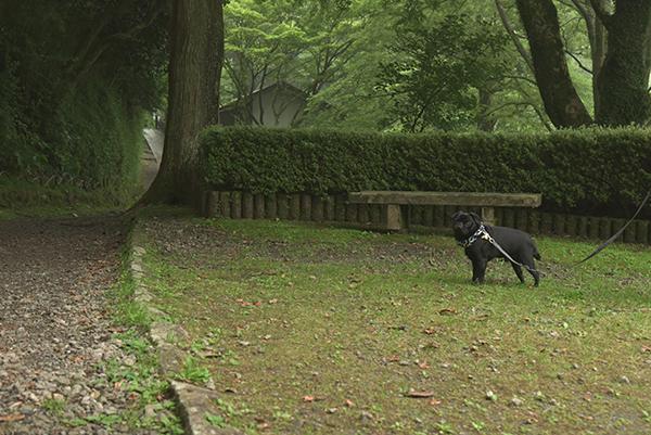 箱根恩賜公園