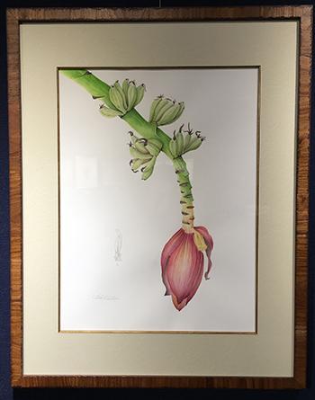 ボタニカルアート