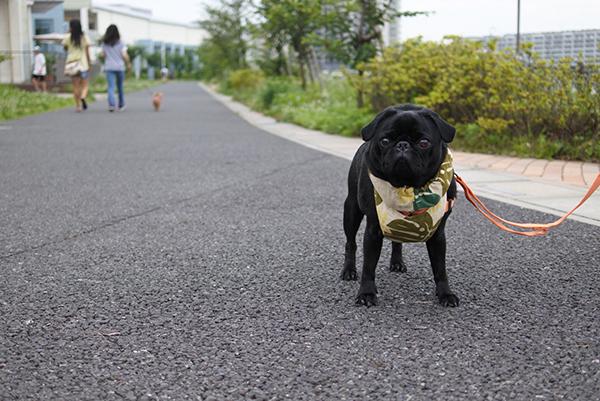 湖畔遊歩道