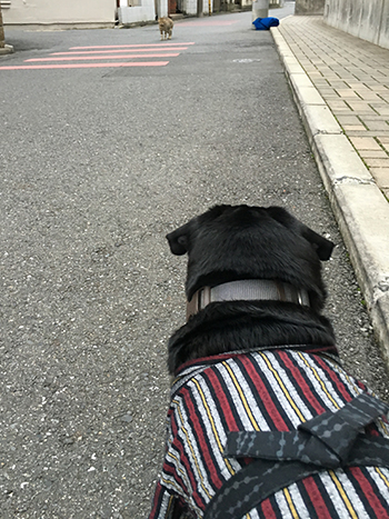 にゃんこせんせー発見!