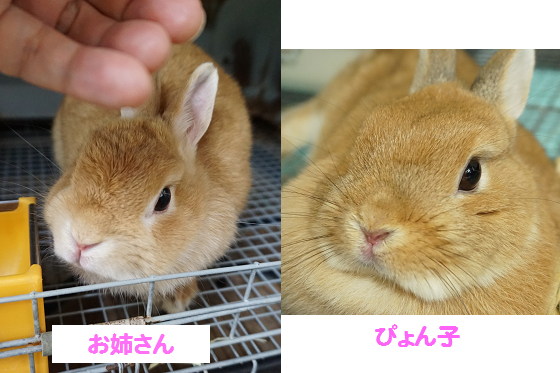 ぴょん子161012_03