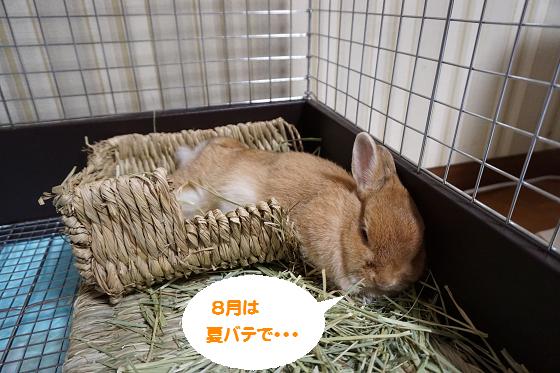 ぴょん子160902_00