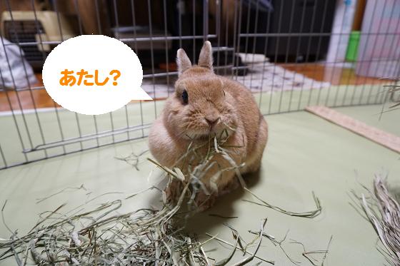 ぴょん子160418_07