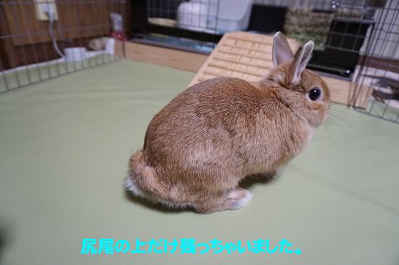 ぴょん子160524_01
