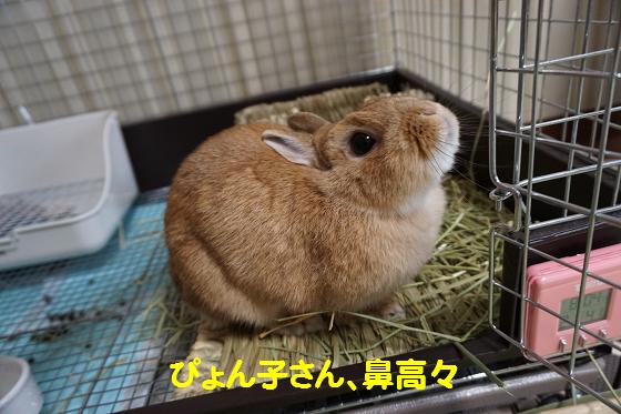 ぴょん子160602_01