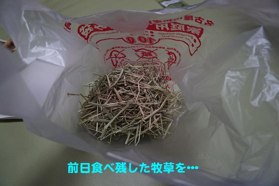 ぴょん子160610_00