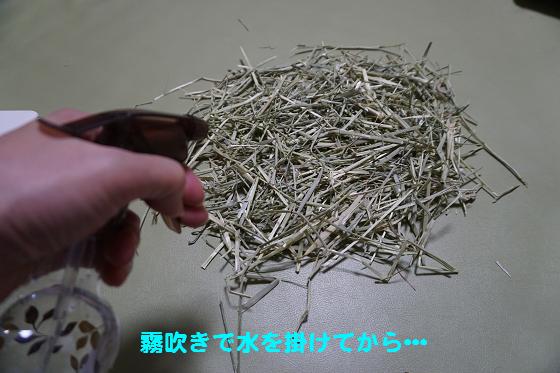 ぴょん子160610_02