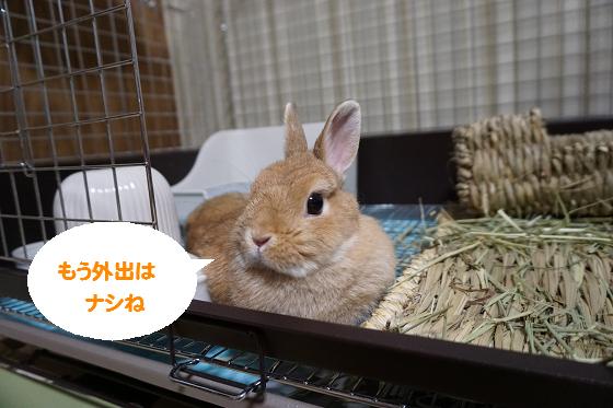 ぴょん子160626_00