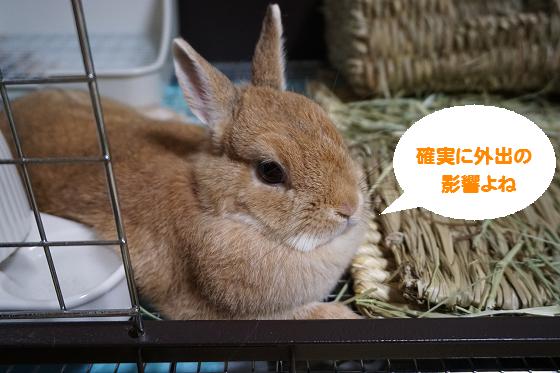 ぴょん子160626_01