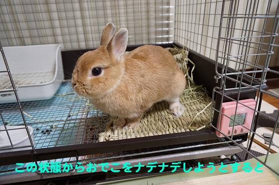 ぴょん子161005_00