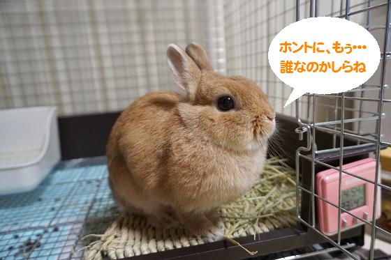 ぴょん子161009_01