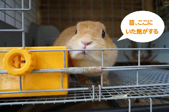 ぴょん子161012_00