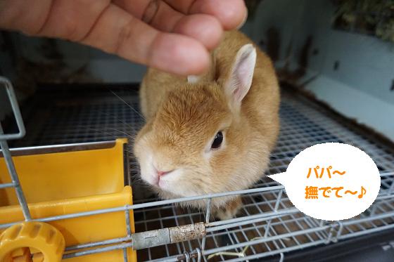 ぴょん子161012_01
