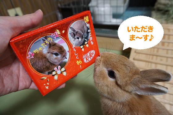 ぴょん子161021_00