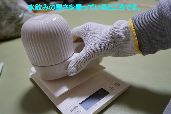 ぴょん子161104_0
