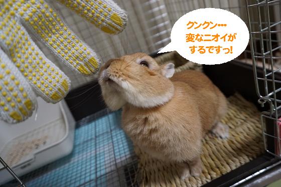ぴょん子161104_02