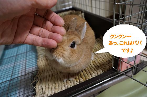 ぴょん子161104_03