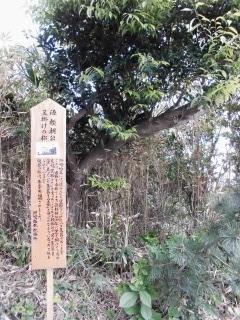 2015年0504日 洲崎神社11