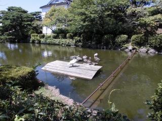 2015年08月16日 荘内神社10
