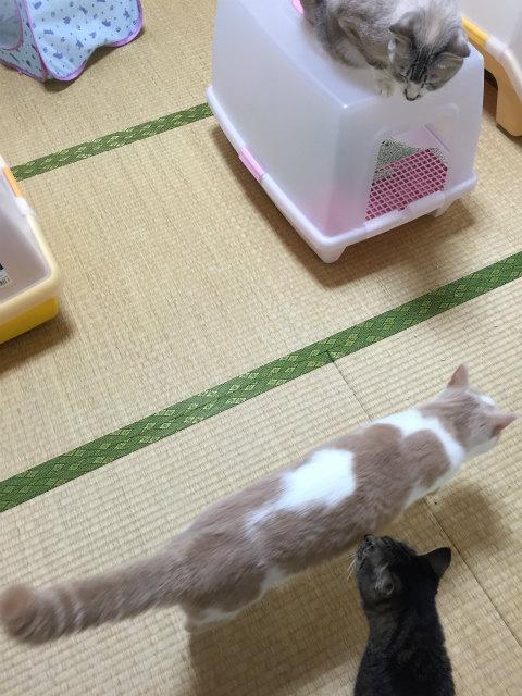 20160915IMG_3693.jpg