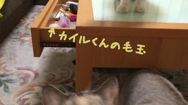 20160918IMG_3853.jpg