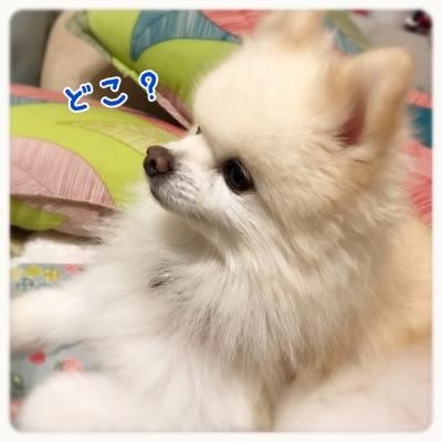 20161020001432e43.jpg
